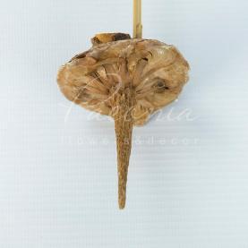 Сухоцвіт мікс висота 50см квітка из шишки