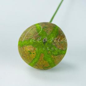 Сухоцвіт мікс висота 50см цитрус зелений