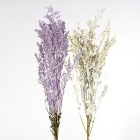 Сухоцвіт Солідаго