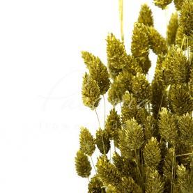 Сухоцвіт фаляріс золотий маленький пучок