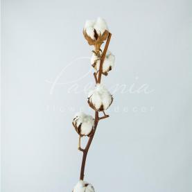 Сухоцвіт бавовна натуральний 8 коробочок