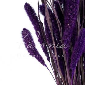 Сухоцвіт сетарея темно фіолетовий