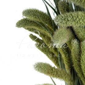 Сухоцвіт сетарія натуральний
