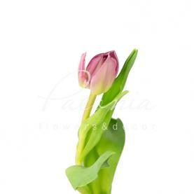 Тюльпан Double Princess ліловий 36см