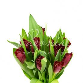 Тюльпан Versaci червоний махровий 36см